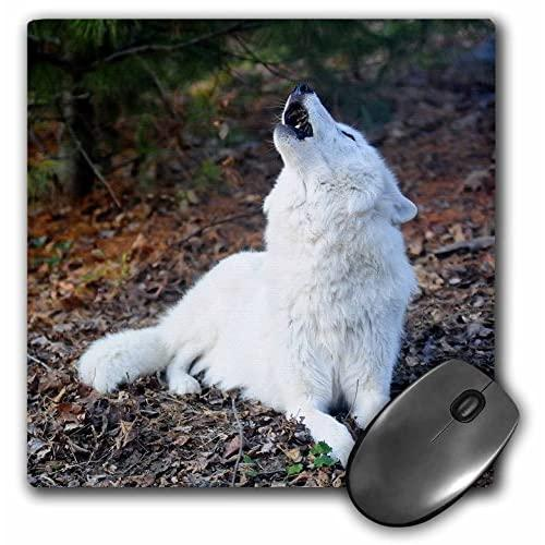 White Arctic Wolf, Howling 2 - Mouse Pad, 8 By 8 Inches (Mp_124322_1)